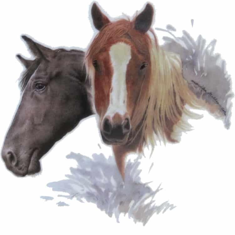 Motiv Pferdeportrait Haflinger und Rappe für Porzellan