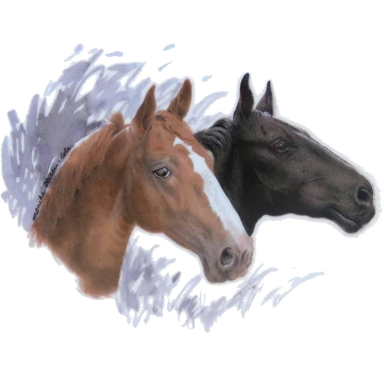Motiv Pferdeportrait Schwarzer und Brauner