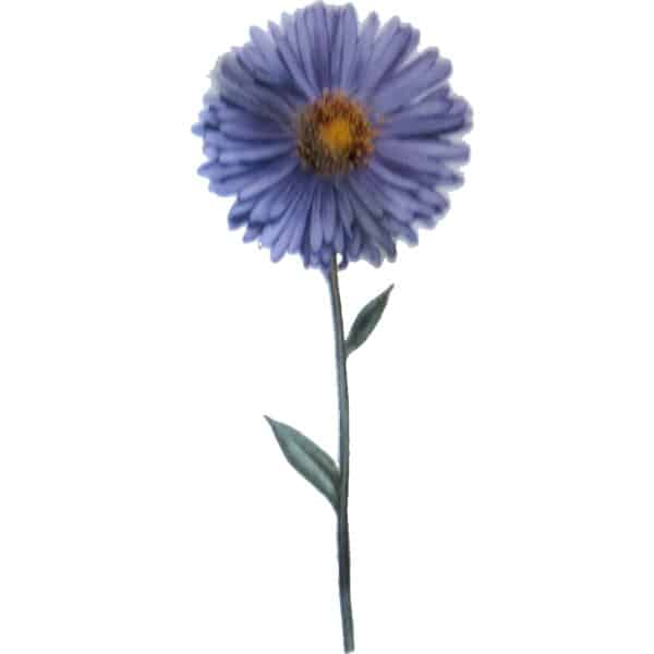 Morderne blaue Aster Gartenblume