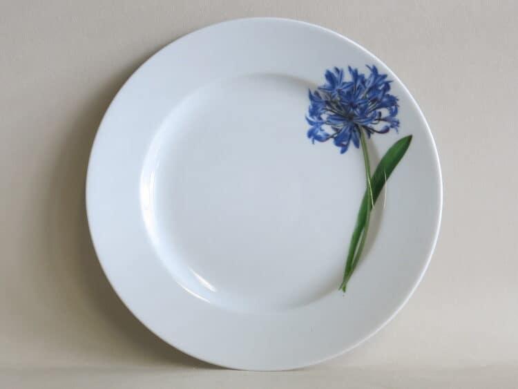Teller Opty 21 cm mit Gartenblume Schmucklilie aus Porzellan