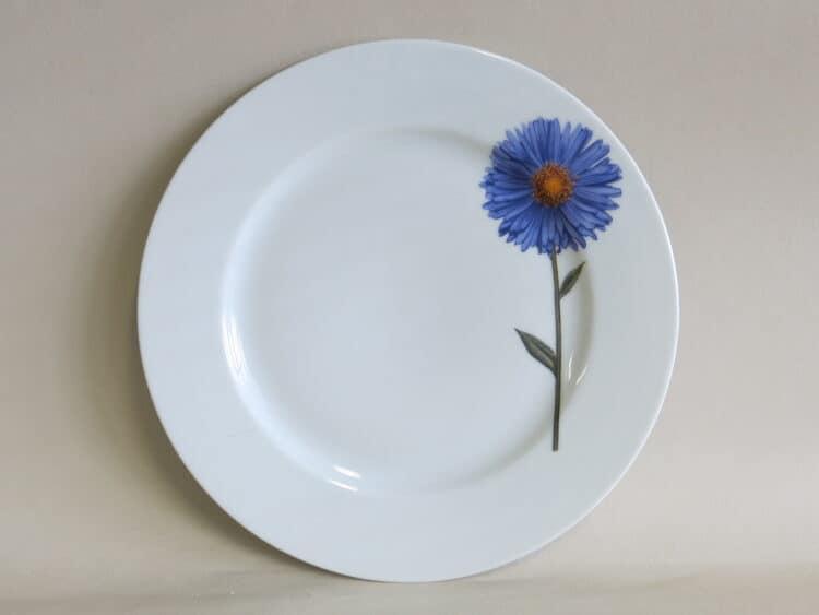 Teller aus Porzellan Opty 21,5 cm mit blauer Aster Herbstaster Blume