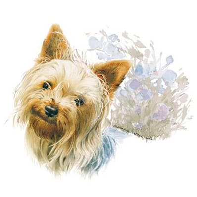 Motiv Hundeportrait Yorkshire Terrier