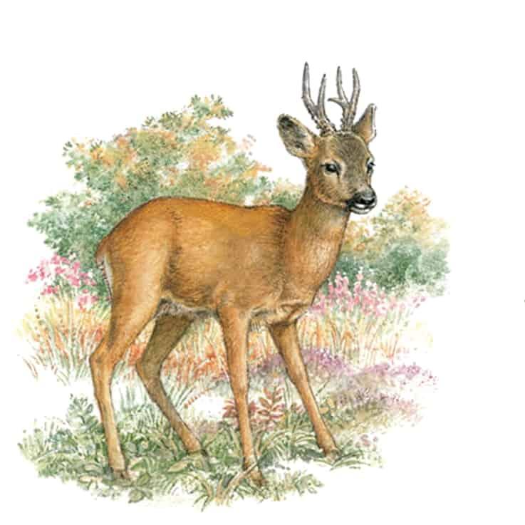 Englische Jagd und Wildekore Rehbock