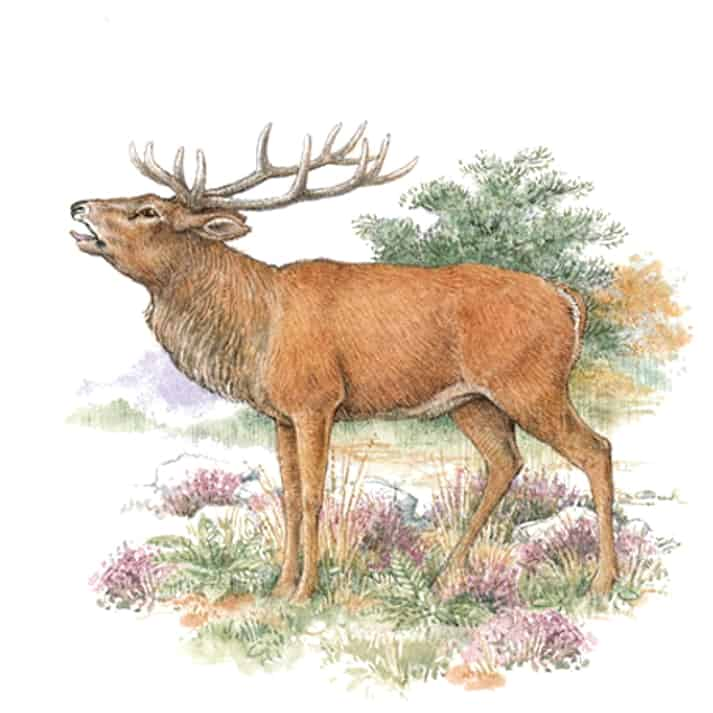 Englische Jagd und Wildekore Rothirsch