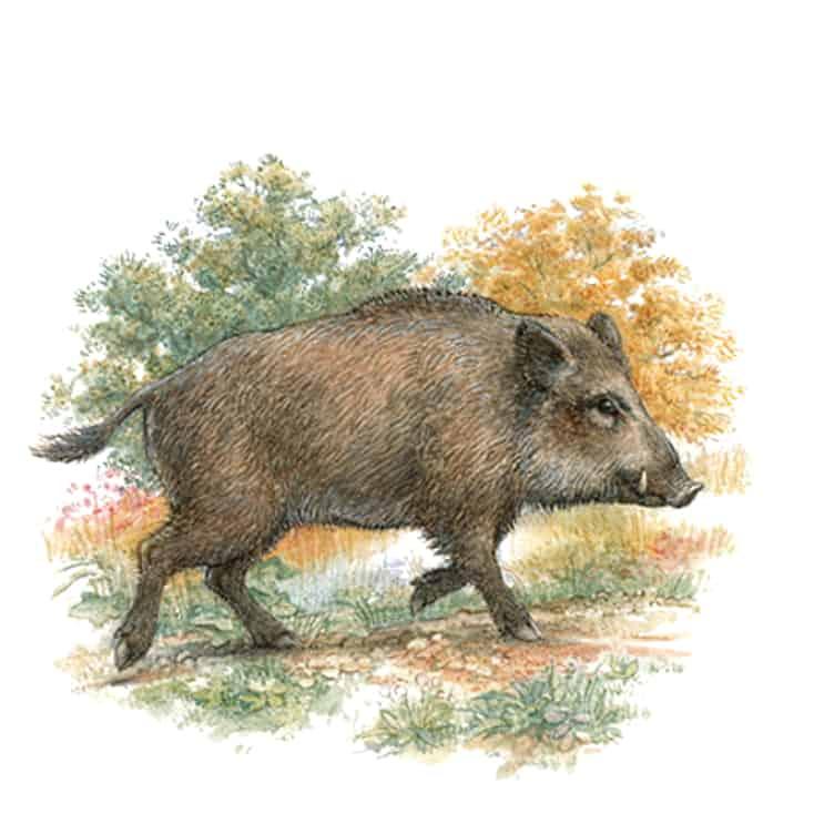 Englische Jagd und Wildekore Wildschwein