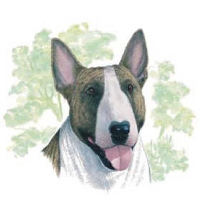 Motiv Hundeportrait Bull Terrier auf Porzellan