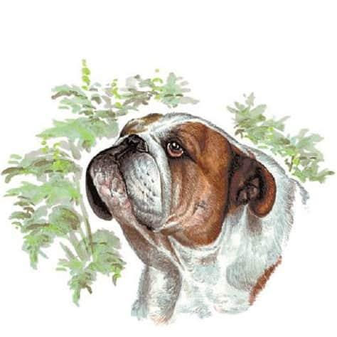 Motiv Hundeportrait Bulldogge auf Porzellan