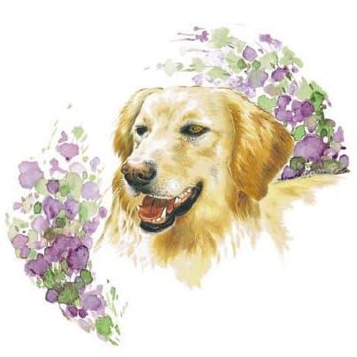 Motiv Hundeportrait Golden Retriever auf Porzellan