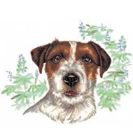 Motiv Hundeportrait Jack Russel auf Porzellan