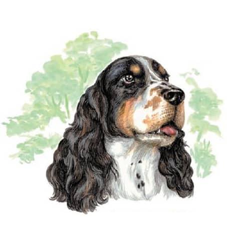 Motiv Hundeportrait Springer Spaniel auf Porzellan