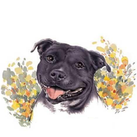 Motiv Hundeportrait Staffordshire Bull Terrier Staffy auf Porzellan
