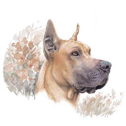 Motiv Hundeportrait deutsche Dogge great dane coupiert kupiert auf Porzellan