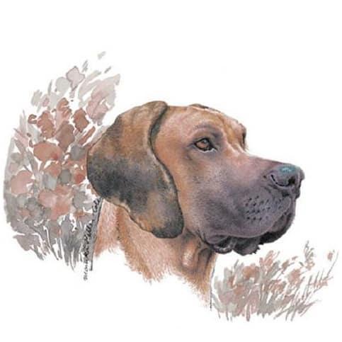 Motiv Hundeportrait deutsche Dogge auf Porzellan